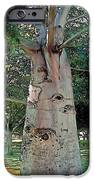 A Lifetime Of Scars IPhone Case by Terry Reynoldson