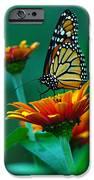 A Monarch II IPhone Case by Raymond Salani III