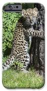 A Whole New World IPhone Case by Sandra Bronstein