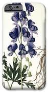 Aconitum Napellus IPhone Case by LFJ Hoquart