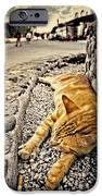 Alley Cat Siesta In Grunge IPhone Case by Meirion Matthias