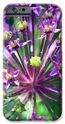 Allium Series - Close Up IPhone Case by Moon Stumpp