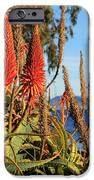 Aloe Vera Bloom IPhone Case by Mariola Bitner