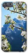 Apple Blossoms Frame The Rockies IPhone Case by Lisa Knechtel