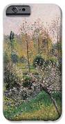 Apple Trees In Blossom IPhone Case by Camille Pissarro