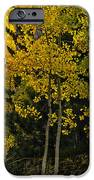 Aspen Light IPhone Case by Dave Dilli