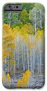 Aspen Stand IPhone Case by L J Oakes