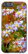 Asters IPhone Case by Ron Jones