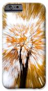 Autumn Explosion IPhone Case by Dave Bowman