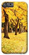 Autumn Perspective IPhone Case by Carol Groenen