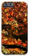 Autumn's Glory IPhone Case by Anne Gilbert