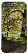 Avenue Of Light IPhone Case by Tim Gainey