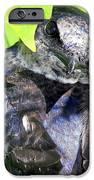 Baby Bluejay Peek IPhone Case by Karen Wiles