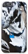Bacchus The Great Dane IPhone Case by Sharon Cummings
