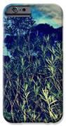 Back Yard Sky IPhone Case by YoMamaBird Rhonda