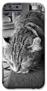Bad Cat IPhone Case by Susan Leggett