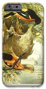 Baltimore Orioles IPhone Case by Philip Ralley