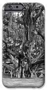 Banyan Tree IPhone Case by Scott Pellegrin