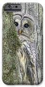 Barred Owl Peek A Boo IPhone Case by Jennie Marie Schell