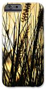 Beach Rise IPhone 6s Case by Laura Fasulo