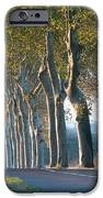 Beloved Plane Trees IPhone Case by France  Art