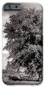 Big Old Tree IPhone Case by Olivier Le Queinec