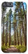Big Valley Views Mvsta Trail IPhone 6s Case by Omaste Witkowski