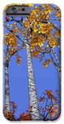 Birch Grove IPhone Case by Cynthia Decker
