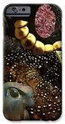 Bird God IPhone Case by Sarah Loft