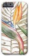Bird Of Paradise 05 Elena Yakubovich IPhone Case by Elena Yakubovich