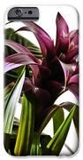 Blooming Bromeliad IPhone Case by Christi Kraft