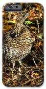 Blue Grouse IPhone Case by Robert Bales
