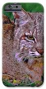 Bobcat Sedona Wilderness IPhone Case by Bob and Nadine Johnston