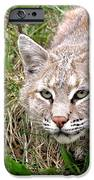 Bobcat Stalking IPhone Case by Sylvie Bouchard