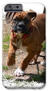 Boxer Puppy 14-1 IPhone Case by Maria Urso
