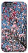 Branches And Blossoms IPhone Case by Carol Groenen