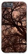 Branching Out At Sunset IPhone Case by James BO  Insogna
