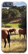Breed Of Horses IPhone Case by Carlos Caetano