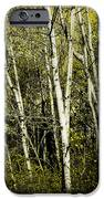 Briers And Brambles IPhone Case by Luke Moore