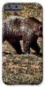 Brown Bears IPhone Case by Angel Jesus De la Fuente