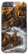Bull Kelp Durvillaea Antarctica Blades In Surf IPhone Case by Stephan Pietzko