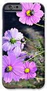 Busy Bees IPhone Case by Susan Leggett