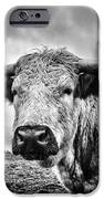 Cadzow White Cow IPhone 6s Case by John Farnan