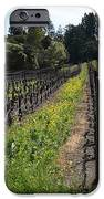 California Vineyards In Late Winter Just Before The Bloom 5d22166 IPhone Case by Wingsdomain Art and Photography