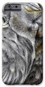 Canadian Lynx IPhone Case by Jurek Zamoyski