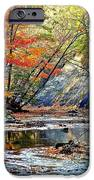 Canopy Of Color Iv IPhone Case by Frozen in Time Fine Art Photography