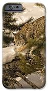 Cat Walk IPhone Case by Priscilla Burgers