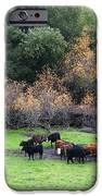 Cattles At Fernandez Ranch California - 5d21071 IPhone Case by Wingsdomain Art and Photography