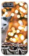 Charly And The Xmas Tree IPhone 6s Case by Edward Kreis
