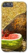 Chicken And Her Watermelon IPhone Case by Sandi OReilly